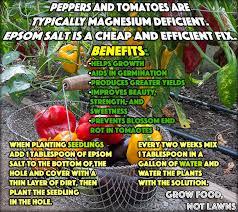 epsom salt for gardening. Brilliant For Use Epsom Salt For Gardening To