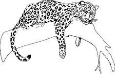 Jaguar Coloring Pages For Kids Chronicles Network
