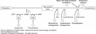 Respiratory Medications Chart Respiratory Drugs Lange Smart Charts Pharmacology 2e