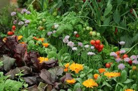 Flower Companion Planting Chart Related Image Garden Vegetable Garden Veg Garden
