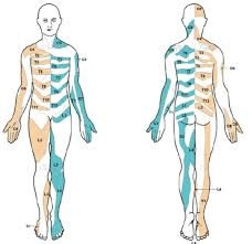 Dermatomal Pattern Impressive Zosteriform DermatosesA Review