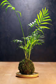 236 best kokedama images on Pinterest | String garden, Plants and ...