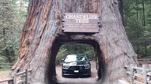 chandelier drive through tree 2016 dodge charger srt