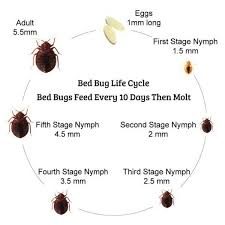 Bed Bugs In Bathroom Beauteous Bed Bugs Are Turning Up Everywhere Bed Bug Facts You Need To Know