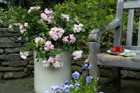 Small Picture Designing Container Gardens Using Flower Carpet Roses Your Easy