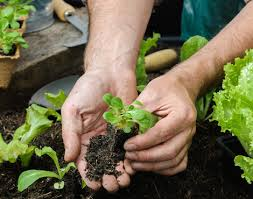 how can sns solve your garden issues