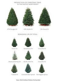 Christmas tree types - in WA I remember having the Douglas or Noble fir;  now in NC it's the Fraser fir or.the one we got today: the Norwegian  Spruce. What a ...