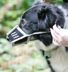 Husher For Dogs Husher Barking Muzzle For Dogs