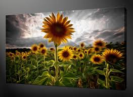 sunflower field canvas wall art pictures prints free uk pp size on sunflower wall art canvas with sunflower wall art canvas supertechcrowntower