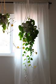 I have five hanging plants in my house right now. Three in our bedroom and  two in our office. I love them an inappropriate amount.