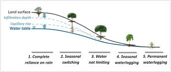 Tree Root Depth Chart Without Much Rain Roots Dive Deep To Find Water Futurity