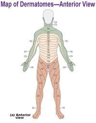 Dermatomal Pattern Simple Innervation Of The Skin Dermatomes