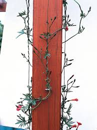 how to choose and maintain climbing plants diy use plastic wire to tie vines and train up posts