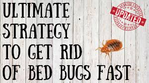 How to Get Rid of Bed Bugs Yourself   Quick Tips for Killing Bed ...