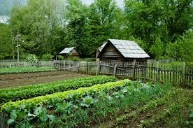 643 161 vegetable garden stock photos