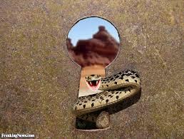 Afbeeldingsresultaat voor laughing snake