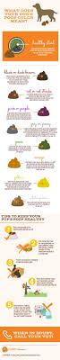 Infographic: Dog Poop Color