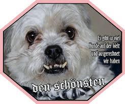 Aufkleber Hund Lustig Shih Tzu Uv Beständig Wetterfest Für