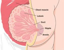 Breastfeeding Wikipedia