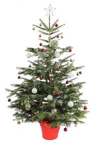 The 10 tree: JTF.com offer this 6ft real Christmas tree, which