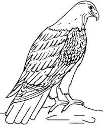 Small Picture wedge tailed eagle Colouring Pages Eagles Pinterest Wedge