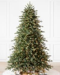 Carolina Hemlock Tree-1