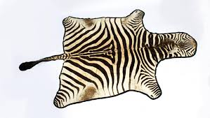 vintage large taxidermy zebra skin rug with felt backing 20th century at 1stdibs