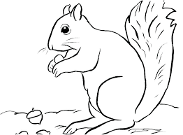 Flying Squirrel Coloring Page Squirrel Coloring Pages Squirrel