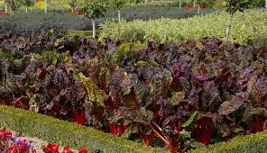 Maasikate kasvatamine taimepüramiidis : suurSiil