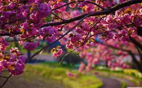 Just click on the sping wallpapers you choose, download it and set it as the background of your desktop screen.beautiful spring imagescute spring imagesspring images wallpapers free downloadspring. Spring Nature Wallpapers Top Free Spring Nature Backgrounds Wallpaperaccess