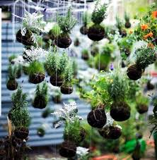 Decorating With Moss Balls Make moss balls to hang himself decoration with flowers and 32