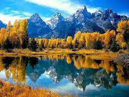Nature, Reflection, Larix ...