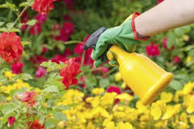 garden pesticides. When To Apply Pesticides: Tips On Using Pesticides Safely Garden Gardening Know How