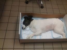 13 photos for garden state veterinary services
