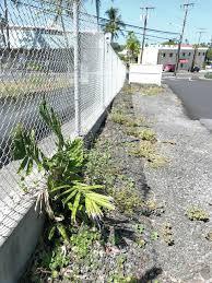 consider low maintenance gardens