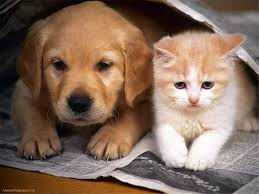 cute kittens and puppies together. Interesting Cute Puppies Kitten Love Cat Cute Friends Puppy Together  To Kittens And D
