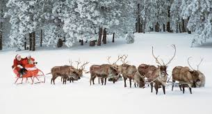 santa claus and reindeer names. What Are The Names Of Santa Reindeer With Claus And
