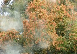 「花粉症の症状が夜に悪化する原因は?解消法や予防法も教えます!」の画像検索結果