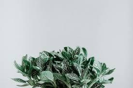 hd wallpaper green plant wall