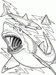 Small Picture Innovative Shark Coloring Pages Free 9 5992