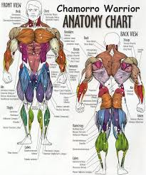 I Like This Chart Great To Reference When An Exercise