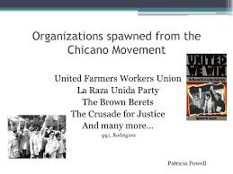 "the origins and history of the chicano movement"" ppt video  organizations spawned from the chicano movement"
