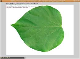 to mark the two terminals of the longest and main vein of the leaf