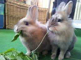 Image result for rabbit