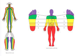 Ageless Foot Zone Therapy Foot Chart For Massage Footzone