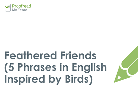 writing tips archives proof my essay s academic blog feathered friends 5 phrases in english inspired by birds