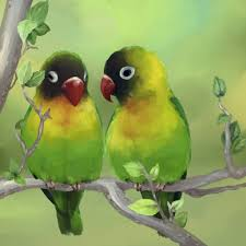 love birds study love birds birds wallpapers