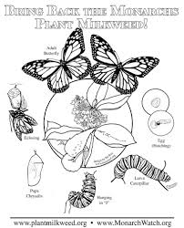 Small Picture Plant Milkweed Complex Coloring page Milkweed Pinterest Plants