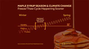 Maple Syrup Season And Climate Change Climate Central