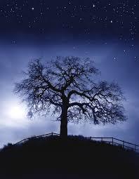 tree art tree painting tree print night sky art stars by lewfoster
